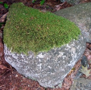 Life-MossOnBoulder