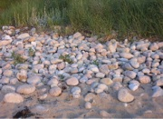 Stone-CobbleBeach
